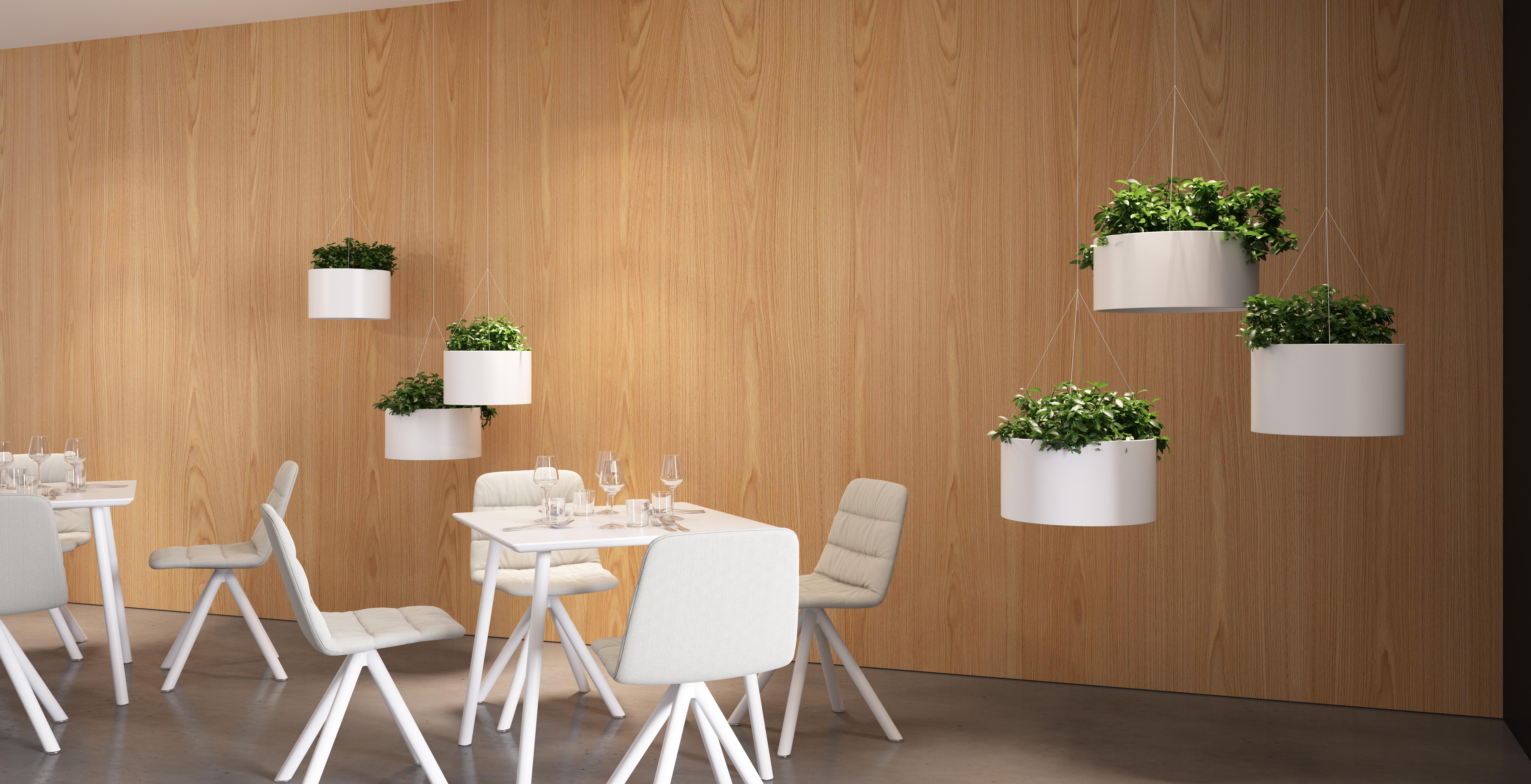 Plantas colgantes para interior consigue entornos m s - Plantas colgantes interior ...